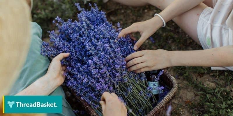 lavender flower in a basket held by two women